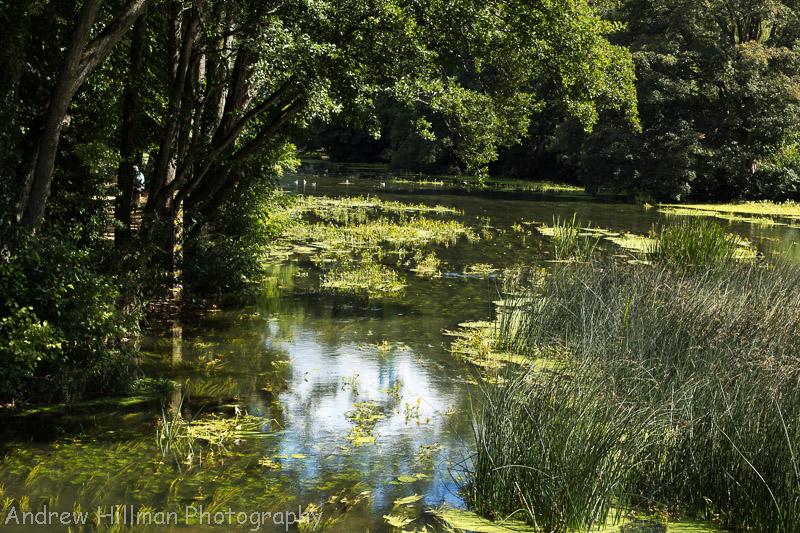 River Stour, Blandford