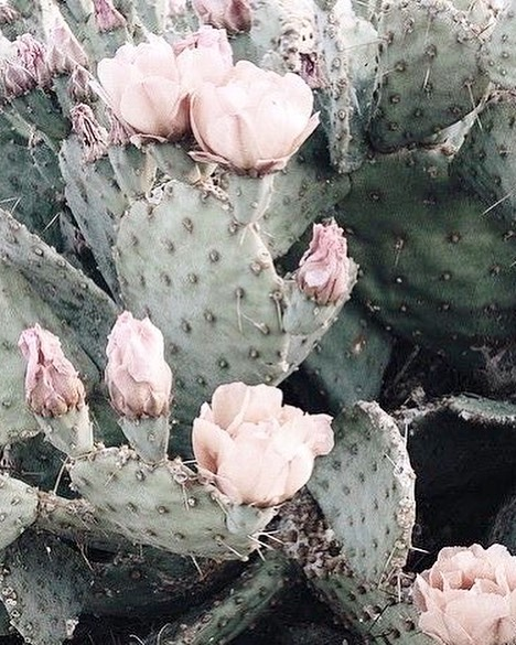 """Tuesday inspo: """"Nopal"""" - Cactus. A little bit spice, a little bit sweet! #handmadeshoes #atelierancestro #chanklas #wanderlust #cactus"""