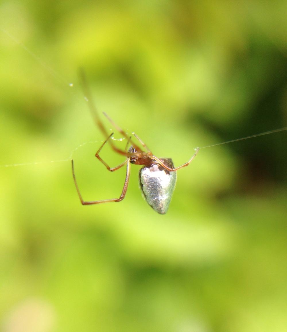 Metal Spider.JPG