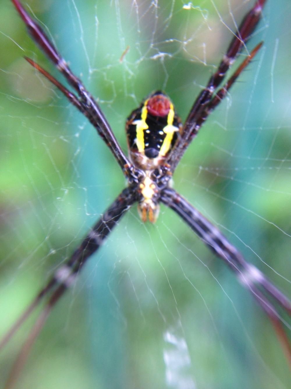 Dragon Spider.JPG