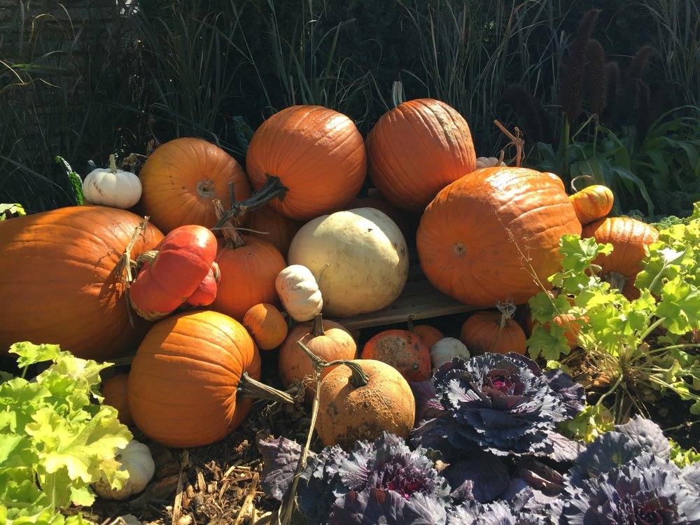 Pumpkins at the Chicago Arboretum.