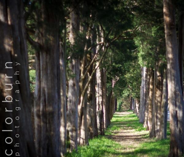 Maymont Trees