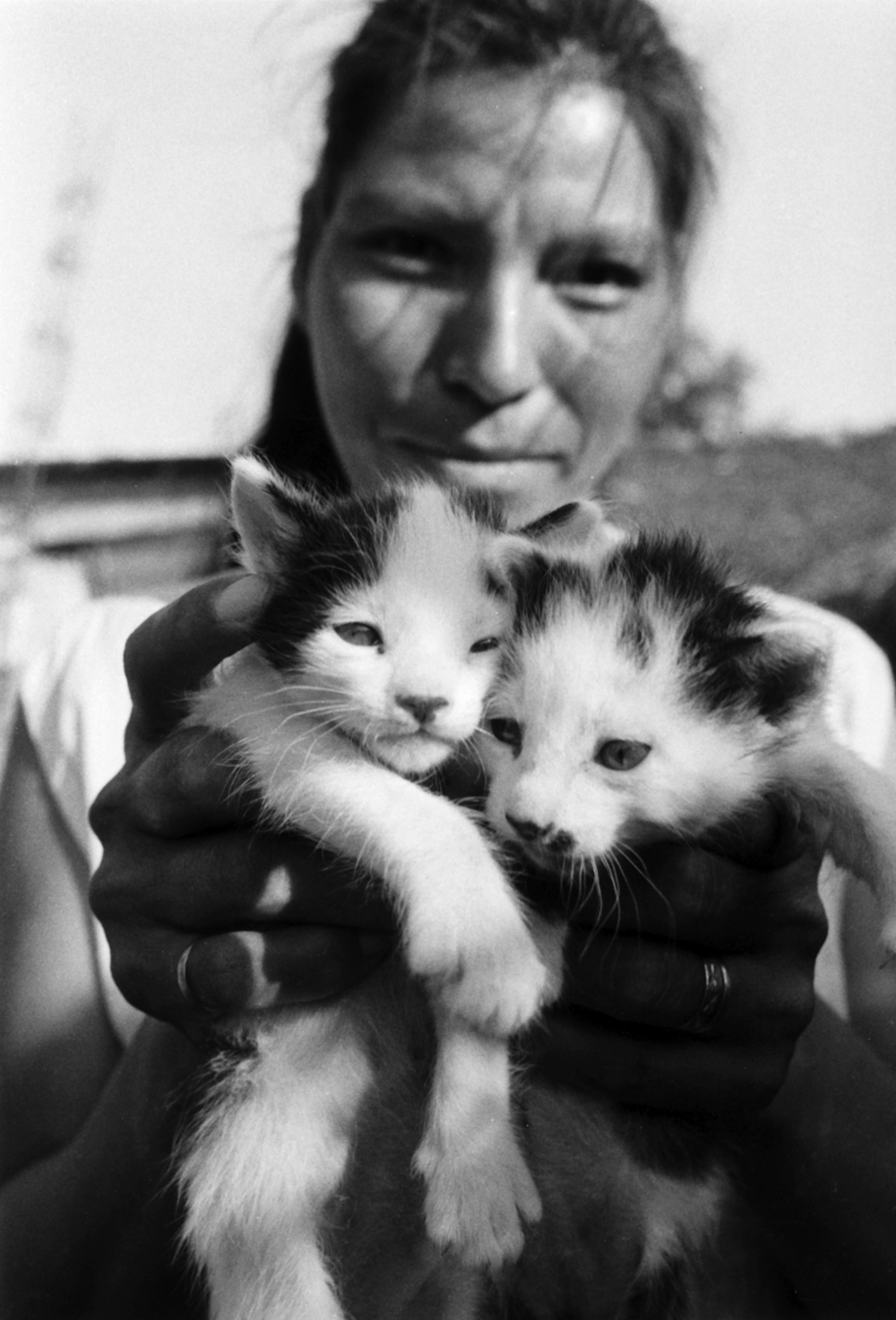 Kittens_web.jpg