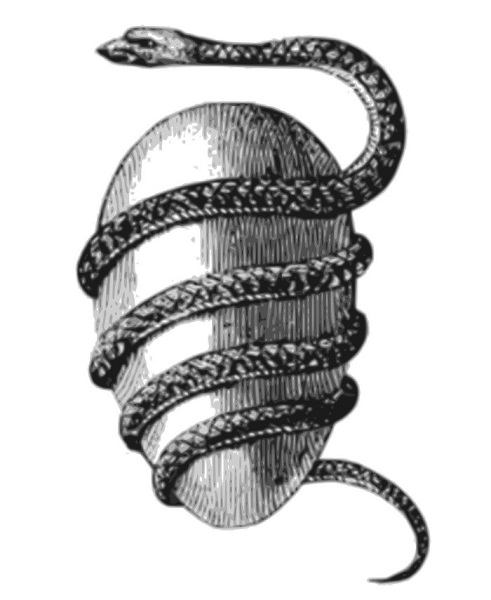 snake_egg.jpg