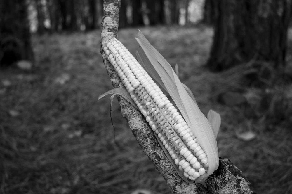Xik'ajan / Hoja de elote / Corn leaf