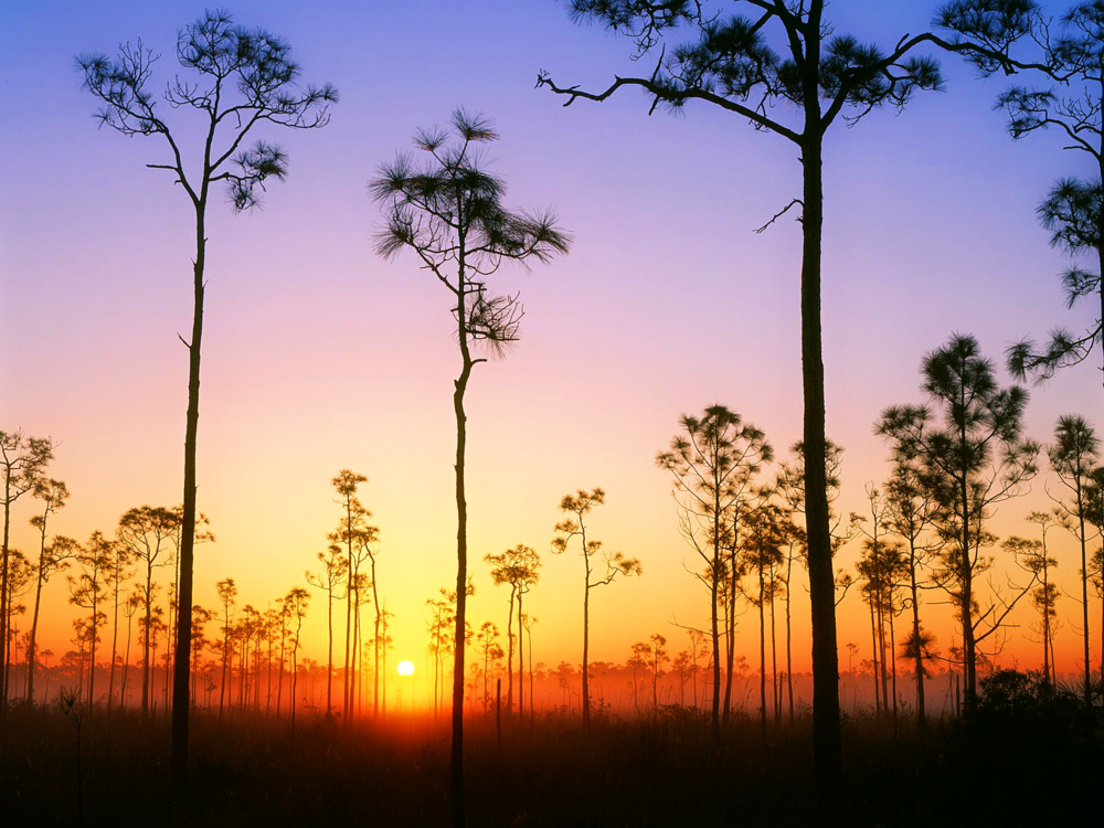 Everglades-National-Park-Wallpaper.png