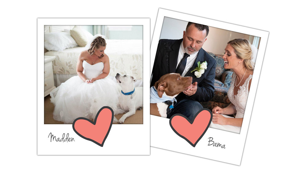 We're the people who center our big day around our dogs. -