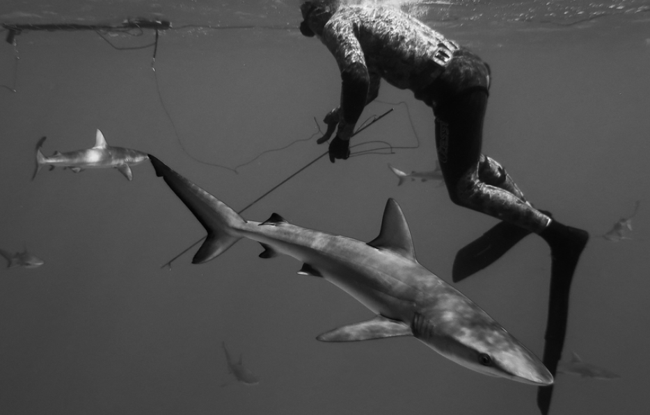 Sharks, in every direction. Photograph: Julia Wheeler Photography