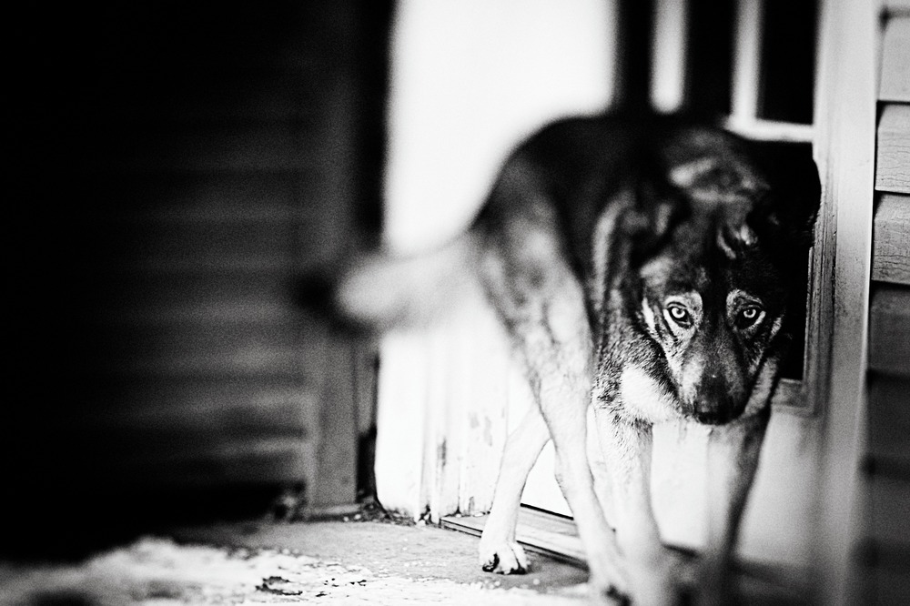 Eastwood Wolf Leica.jpg
