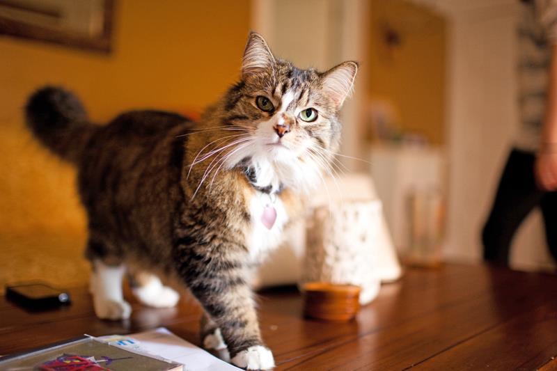 Betty the Cat