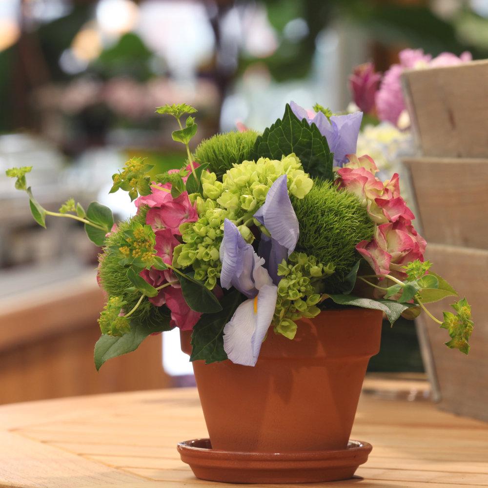 Floral-4-resized.jpg