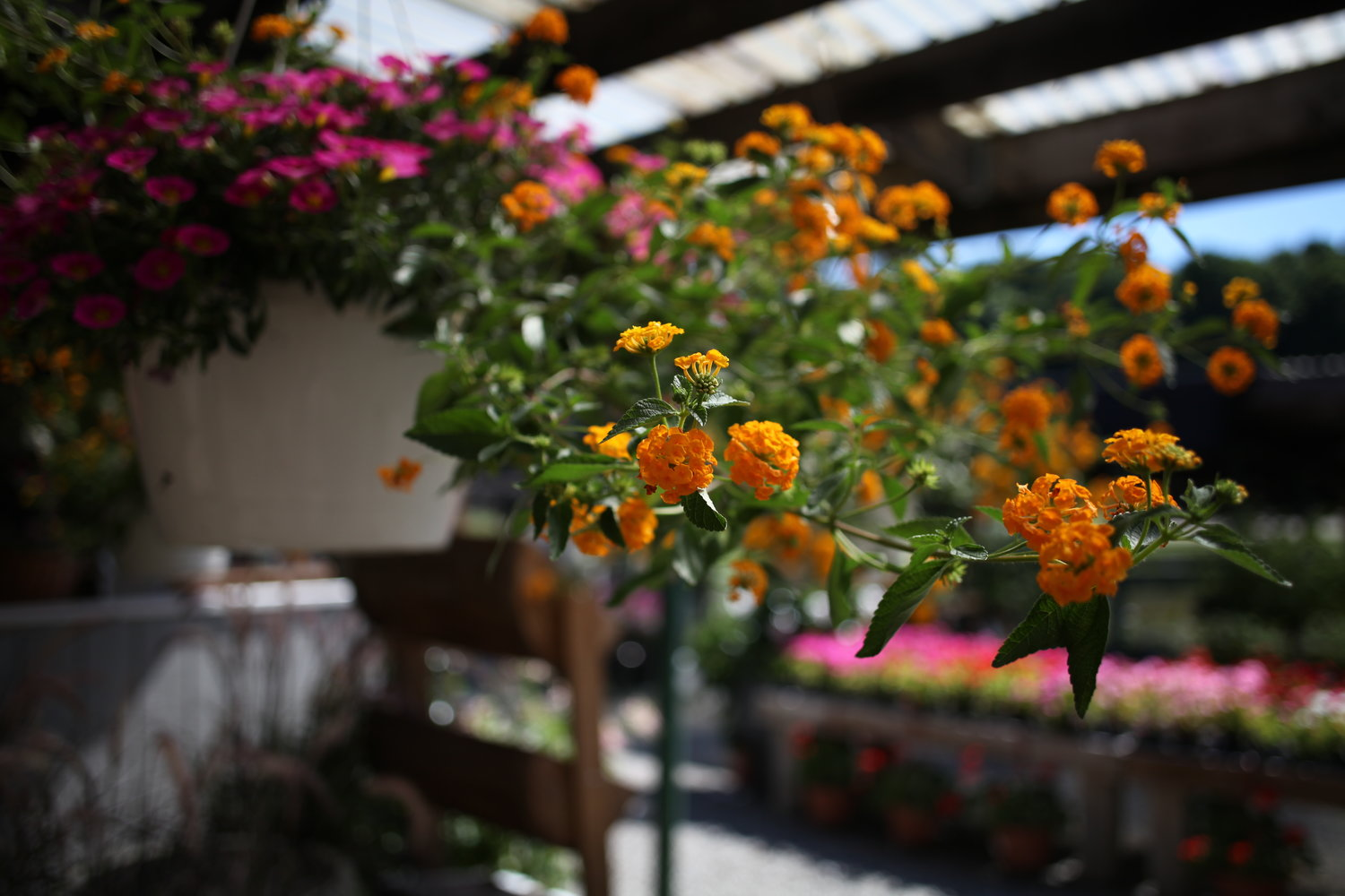 Annuals perennials pound ridge nursery and garden center annual flowers add vibrancy and color to any garden scheme the innumerable shades and shapes available from bedding plants and large specialty annuals are izmirmasajfo