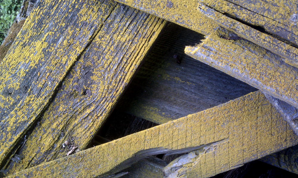 100 year old barn wood  2