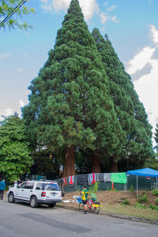 trees (2 of 7).jpg