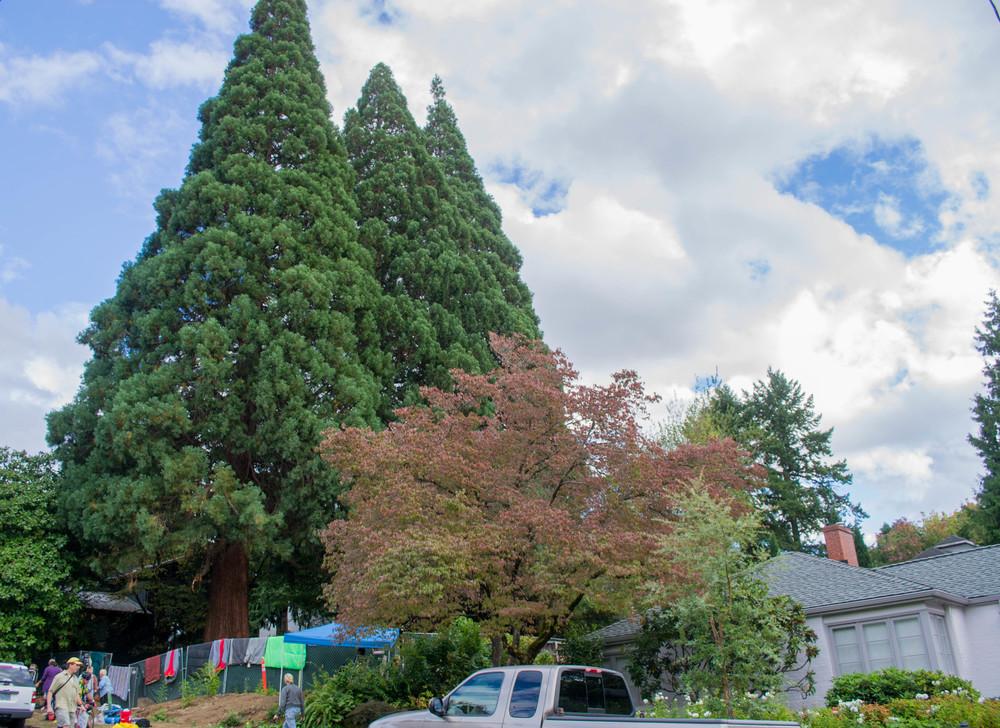 trees (5 of 7).jpg