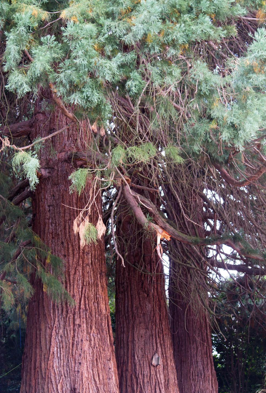 trees (7 of 7).jpg