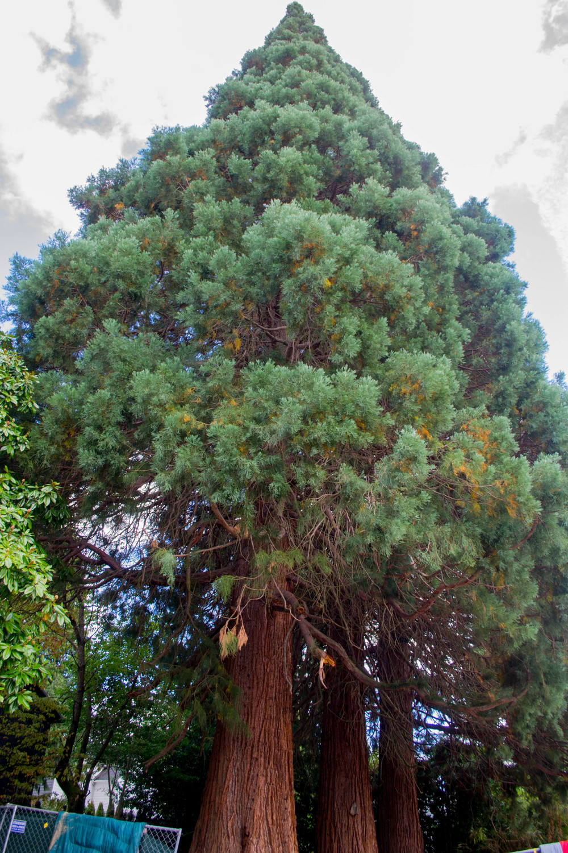 trees (3 of 7).jpg