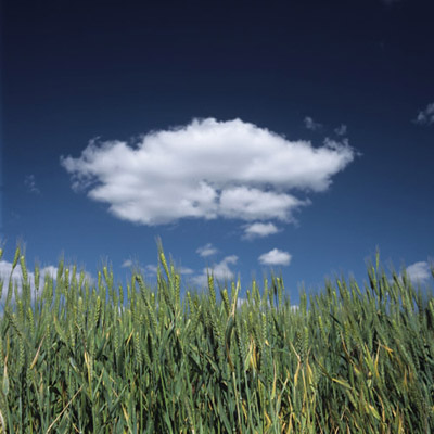 Wheat Field and Cloudscape