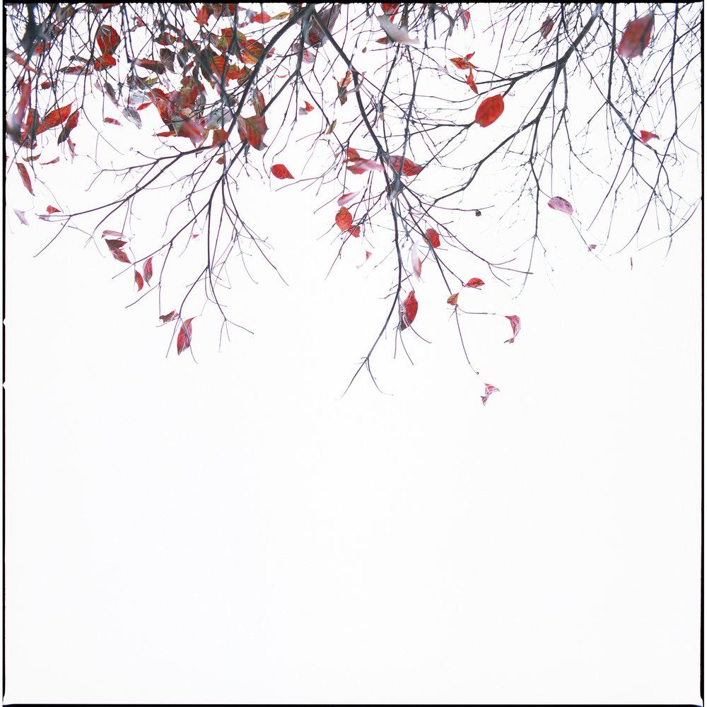 Botanicals:Minimalist film images