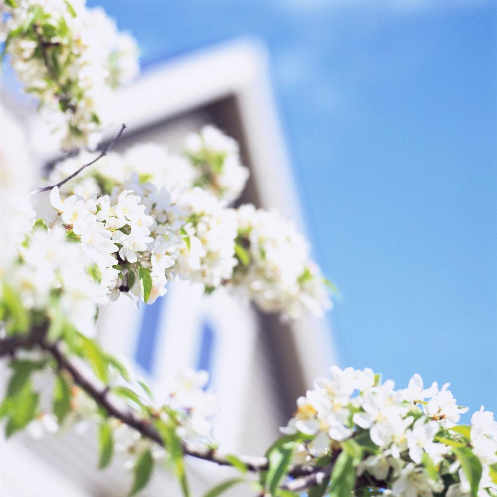 Spring #3
