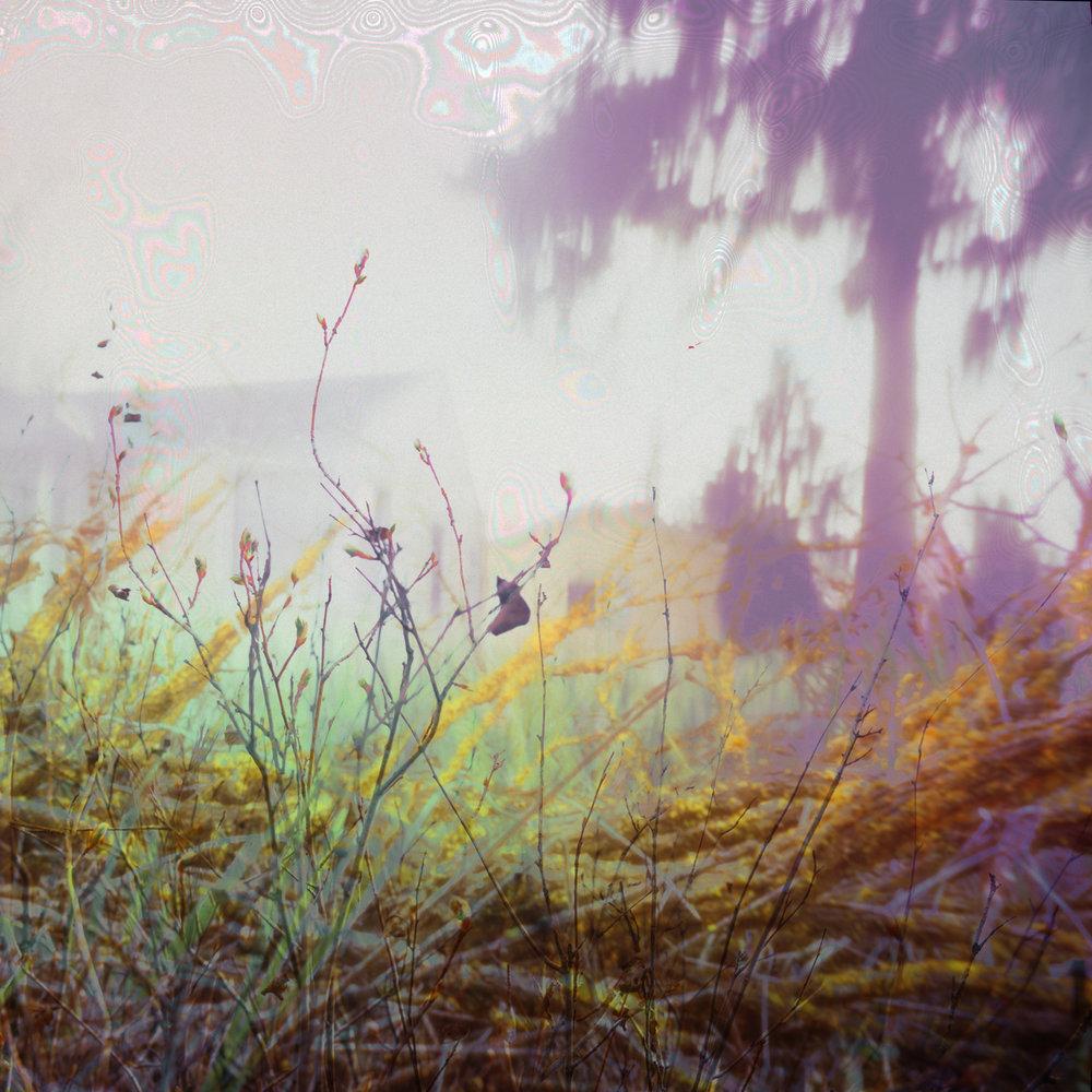 ViewFromTheWood_1920.jpg