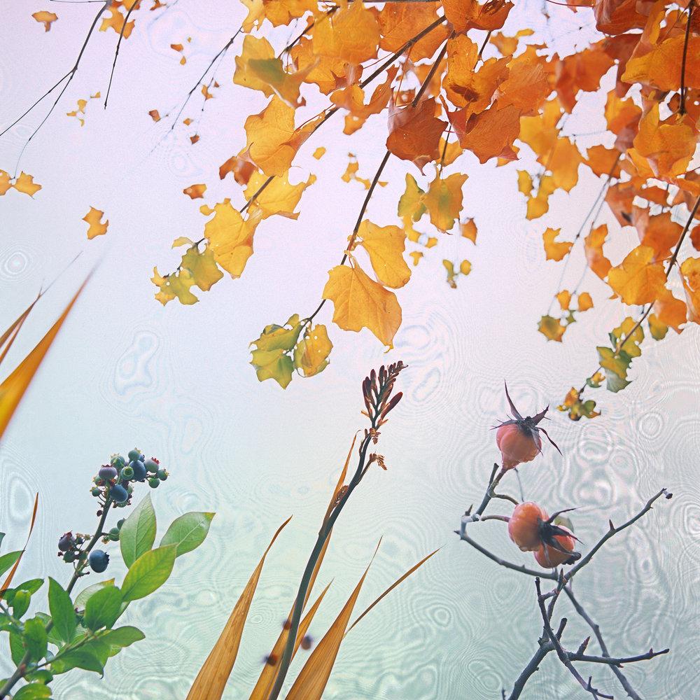Autumn's 4 Elements