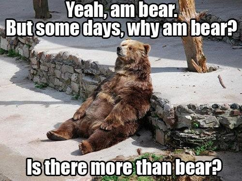 Don't be like this bear. There is more than bear.