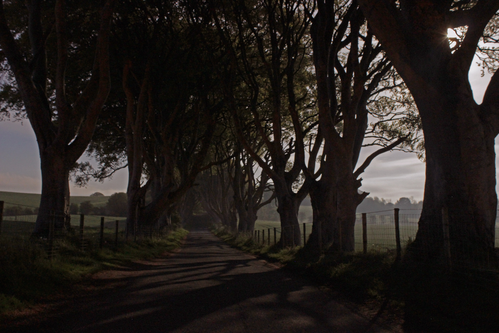 The Dark Hedges, Co. Antrim