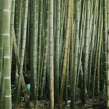 Część 12. Arashiyama (i zwariowany lodziarz z Kioto)