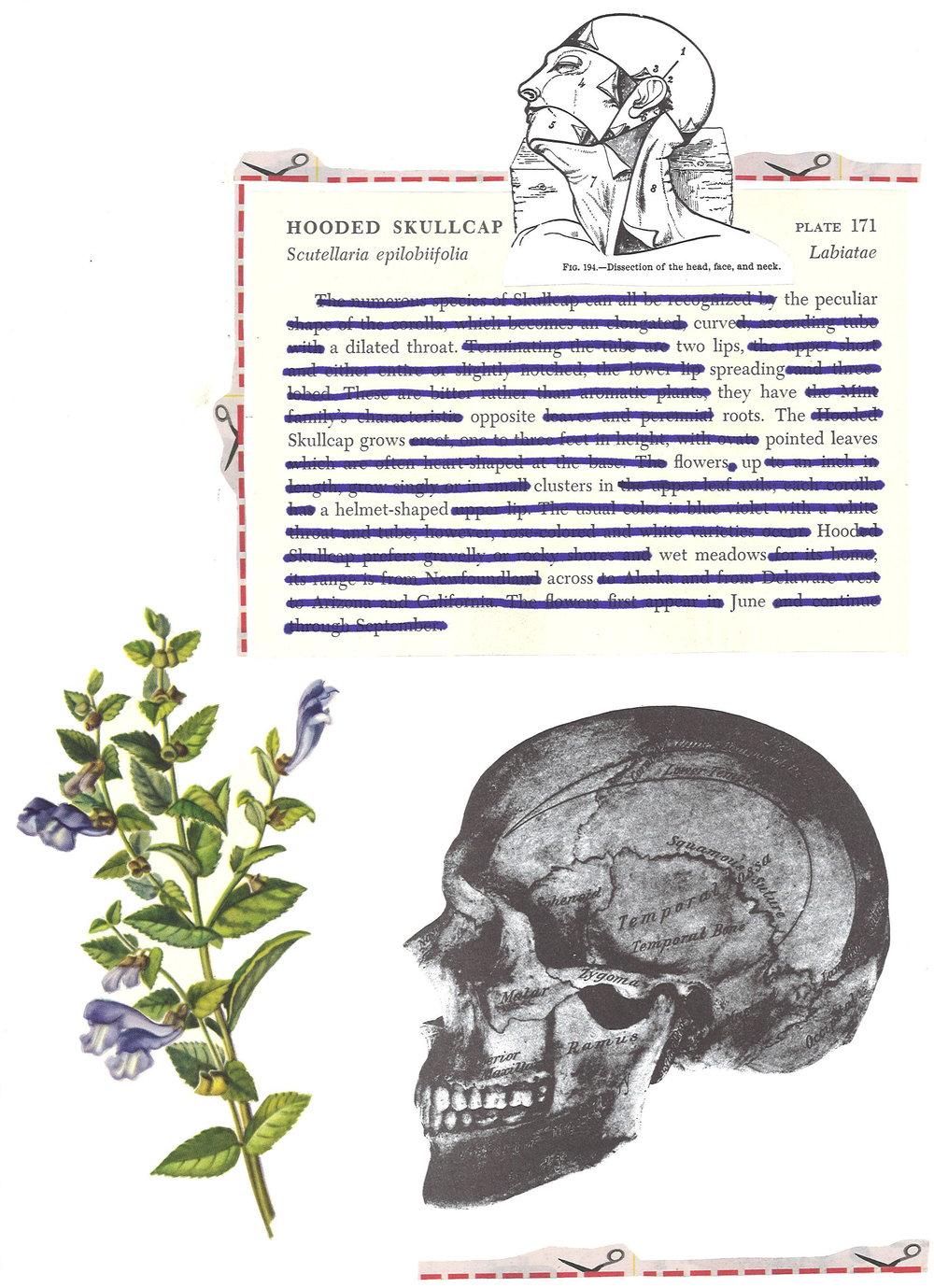 hooded_skullcap_poem-collage.jpg