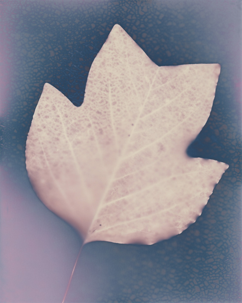 Lumen 158 - Poplar