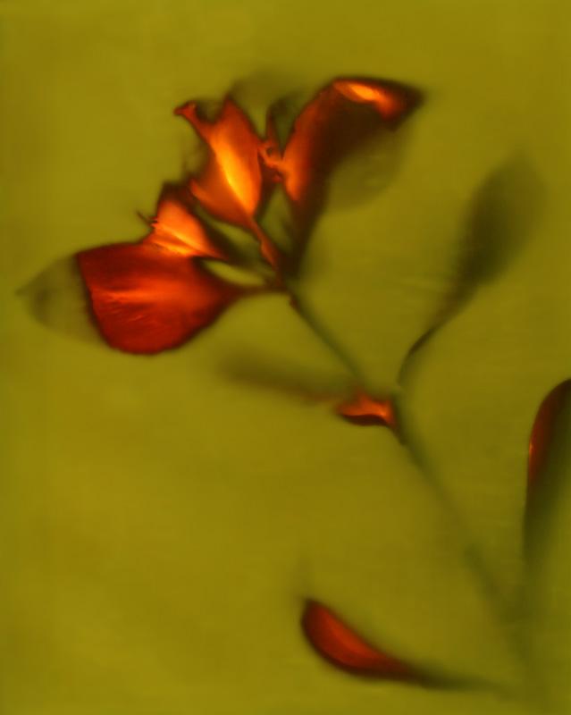 Lumen 30 - Lily
