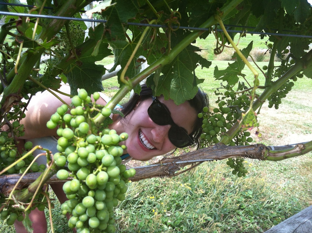 Gabrielle peeking her head through the grapes. Should be time to harvest soon!