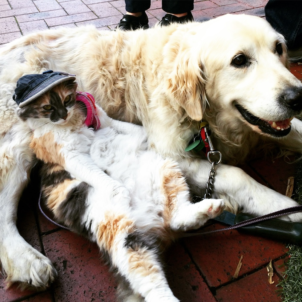 In a way, we're much like this incredible dynamic duo whom we met on the way to the ferry in Auckland - Joe the friendly Golden Retriever whose up for anything and me the 'cat in the hat,' just down for whatevs.