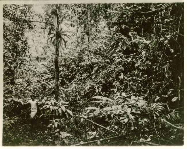 De jungle vanNicaragua