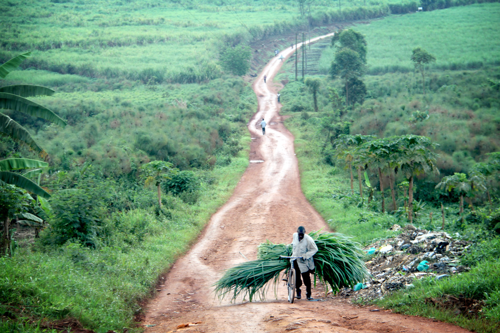 21.9.13 Sugarcane fields in Ssebizwa.JPG