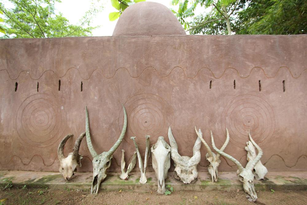 African animal skulls