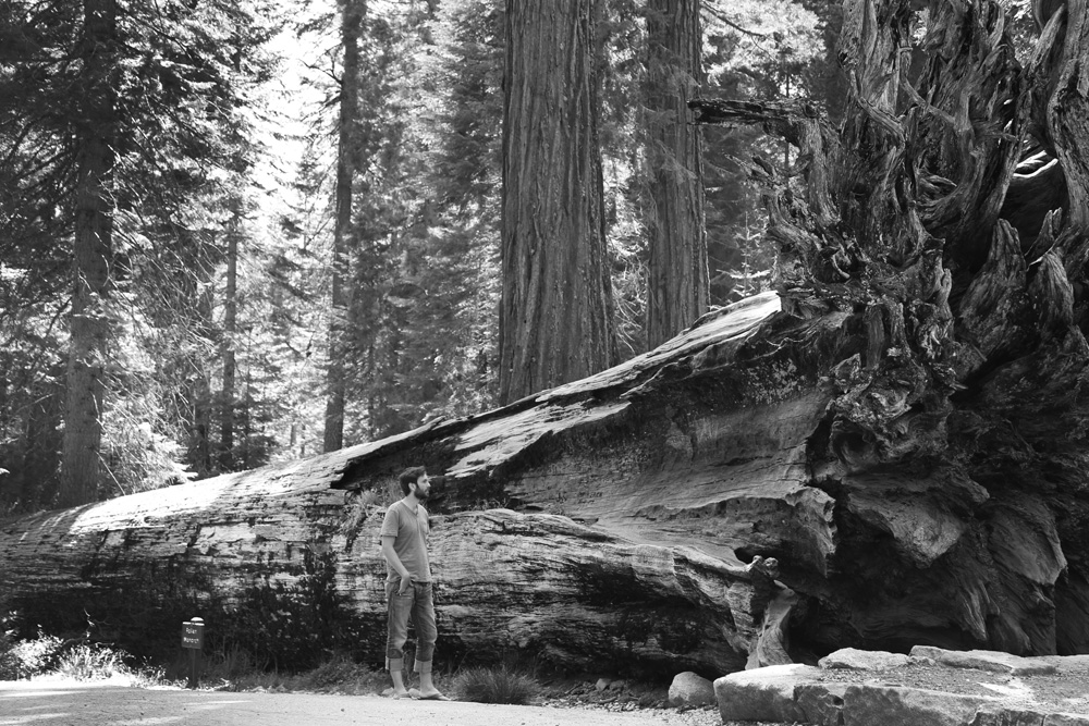 Eric beside a fallen sequoia tree