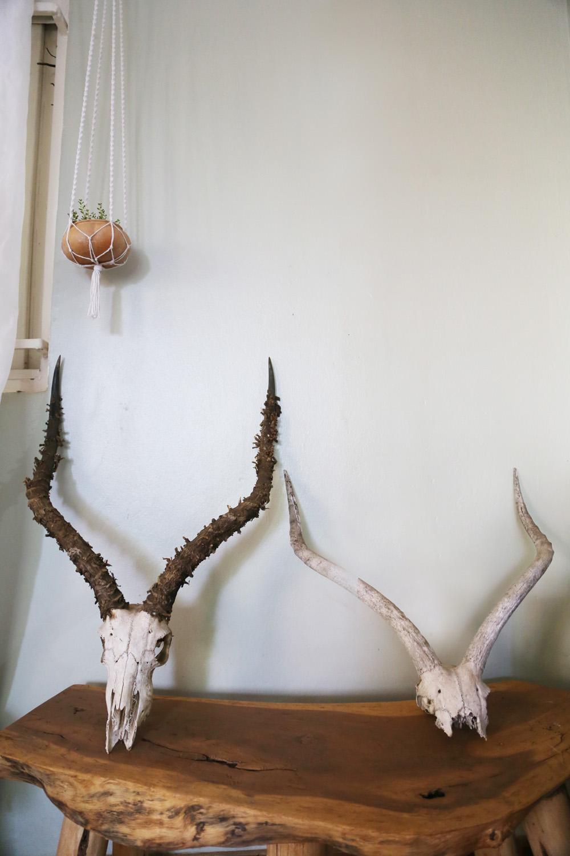 Impala skulls