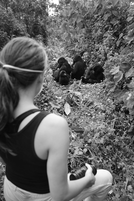 with the mountain gorillas