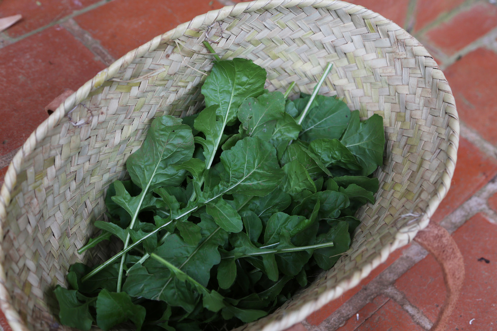 arugula from the garden