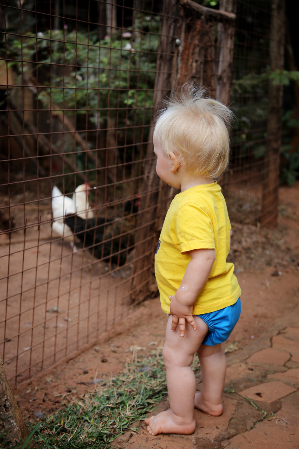 7.14.16 Checking out the chickens.JPG