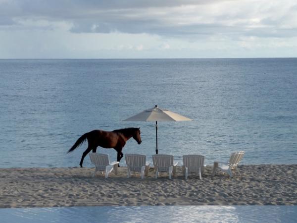 Casa cardonal beach.JPG