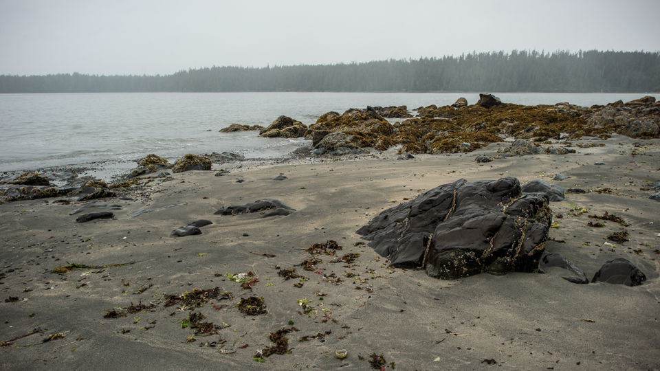 Nigel Fearon Photography | The West Coast Trail-3.jpg