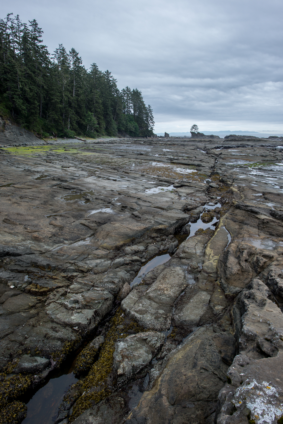 Nigel Fearon Photography | The West Coast Trail-40.jpg