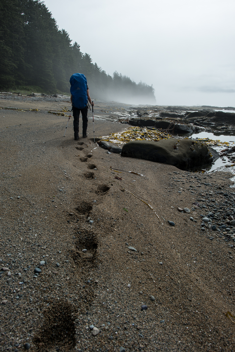 Nigel Fearon Photography | The West Coast Trail-22.jpg