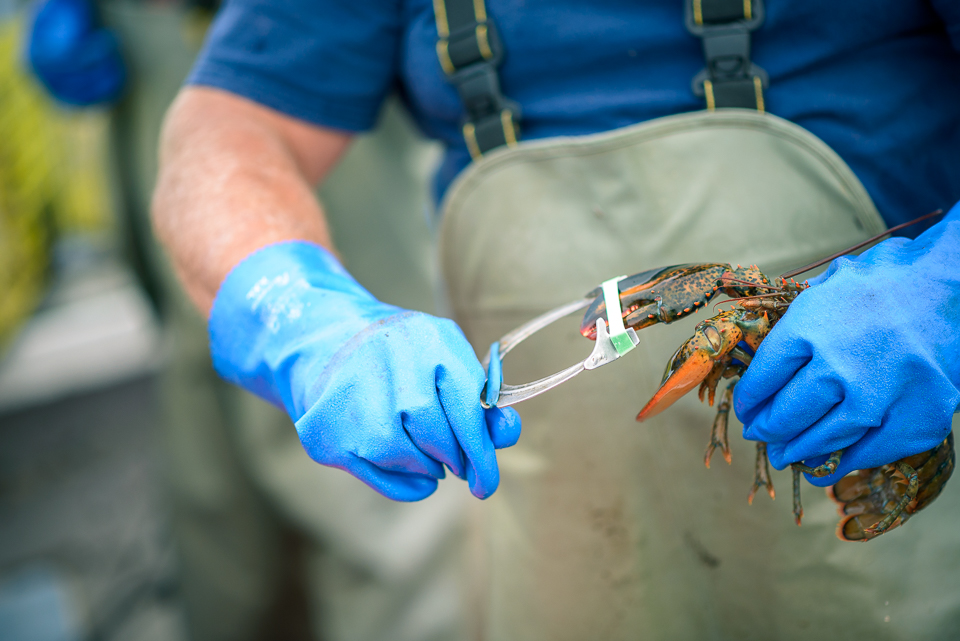 Nigel Fearon Photography | Lobster Fishing-28.jpg