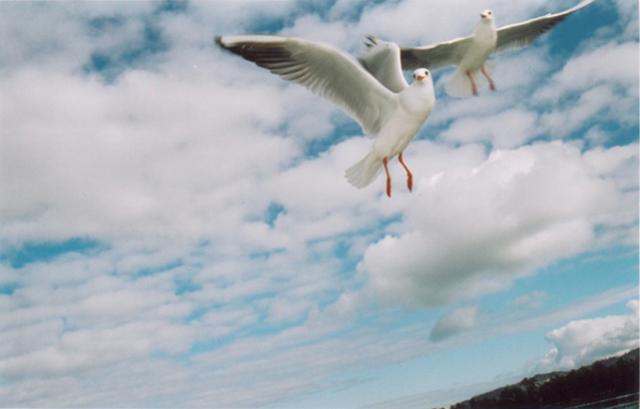two birdy.jpg