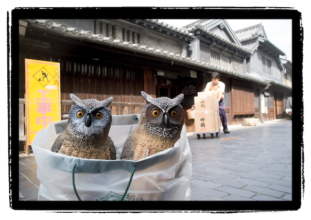 owltaketsuru.jpg