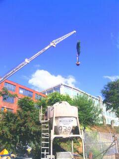 enahnced crane planting at Plant 64.jpg